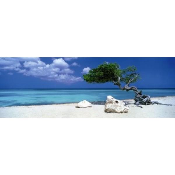 Curacao , Drzewo Divi Divi - Sklep Art Puzzle