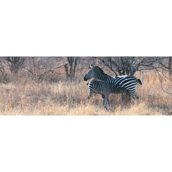 Zakochane zebry (1000el.) - Sklep Art Puzzle