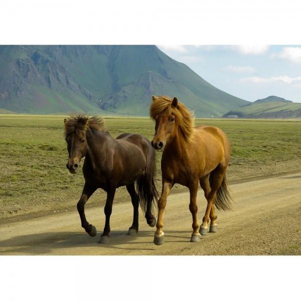 Dzikie konie (HD) - Sklep Art Puzzle