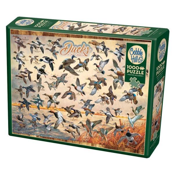 Kaczki z Ameryki Północnej (Puzzle+plakat) - Sklep Art Puzzle