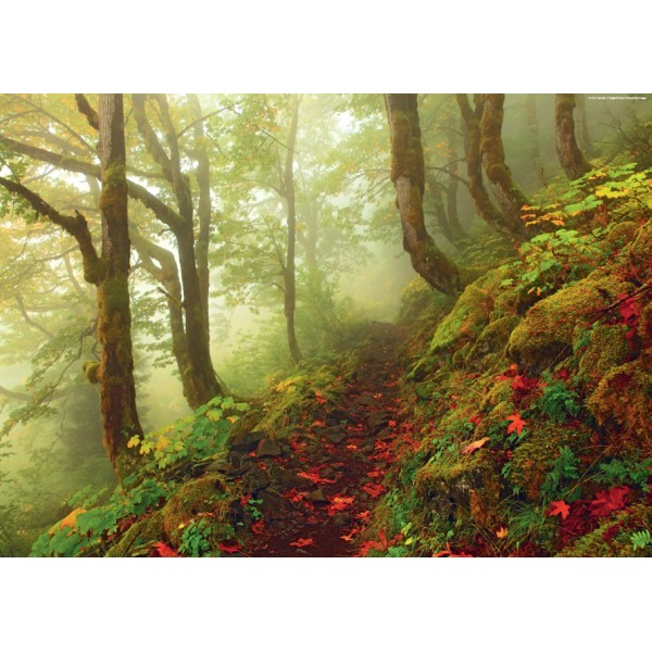 Magiczny las - Ścieżka - Sklep Art Puzzle