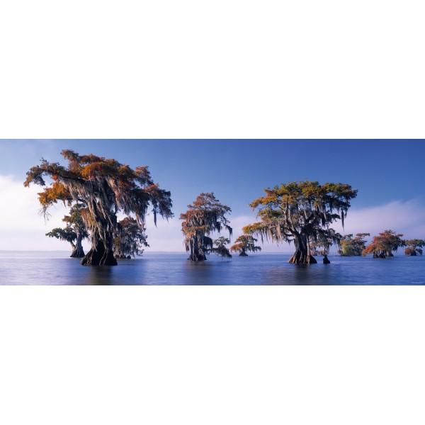 USA, Luizjana - Cyprys błotny, Alexander von Humboldt - Sklep Art Puzzle